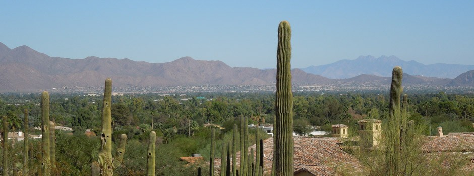 The giant cactus of Phoenix, AZ